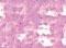 Oljepastell Sennelier 36ml Cobalt violet light hue 95 (3F)