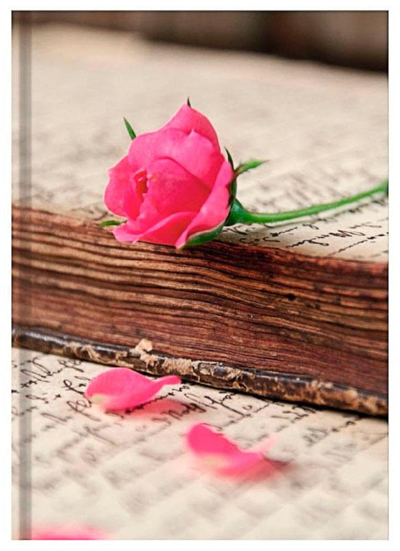 Skrivhäfte Skrivbok A5, 192 sidor olinjerad, (5F)